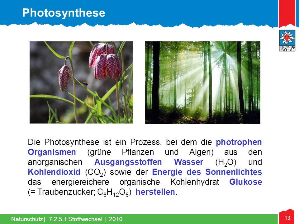 13 Naturschutz |7.2.5.1 Stoffwechsel | 2010 Die Photosynthese ist ein Prozess, bei dem die photrophen Organismen (grüne Pflanzen und Algen) aus den an