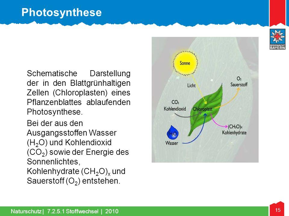 15 Naturschutz |7.2.5.1 Stoffwechsel | 2010 Schematische Darstellung der in den Blattgrünhaltigen Zellen (Chloroplasten) eines Pflanzenblattes ablaufe