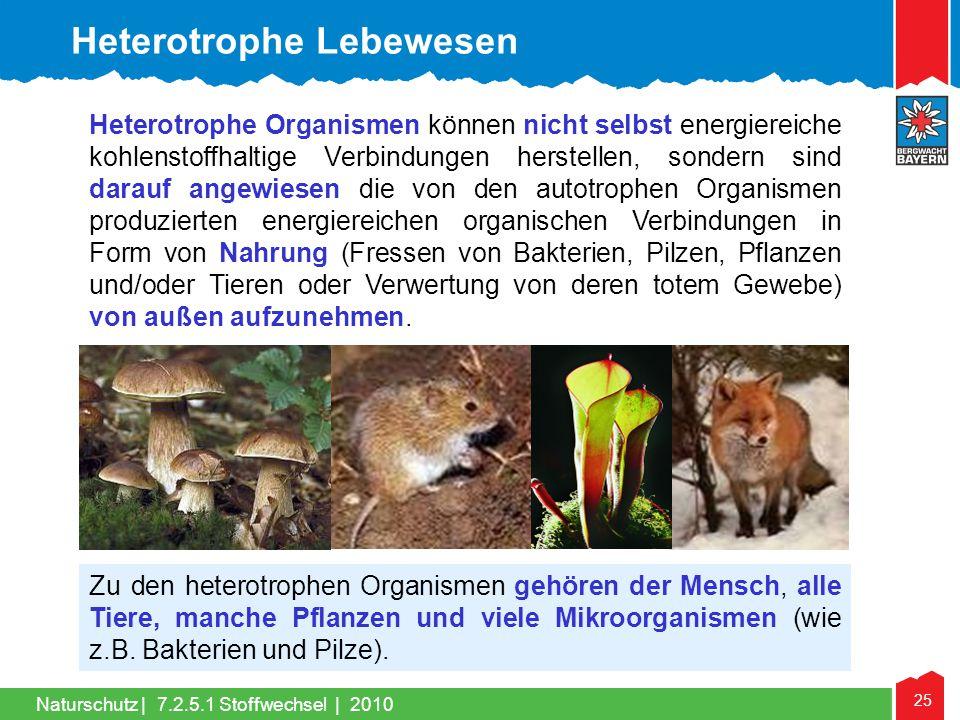 25 Naturschutz |7.2.5.1 Stoffwechsel | 2010 Heterotrophe Organismen können nicht selbst energiereiche kohlenstoffhaltige Verbindungen herstellen, sond