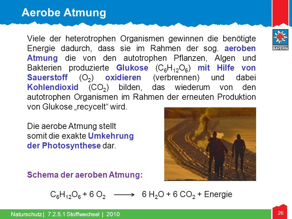 26 Naturschutz |7.2.5.1 Stoffwechsel | 2010 Viele der heterotrophen Organismen gewinnen die benötigte Energie dadurch, dass sie im Rahmen der sog. aer