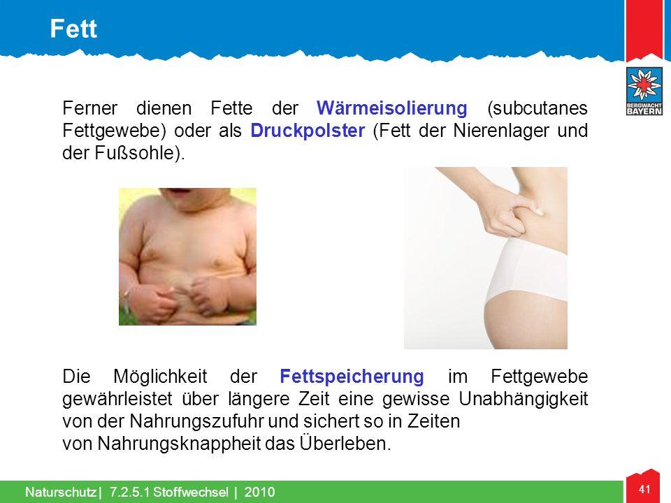 41 Naturschutz |7.2.5.1 Stoffwechsel | 2010 Ferner dienen Fette der Wärmeisolierung (subcutanes Fettgewebe) oder als Druckpolster (Fett der Nierenlage
