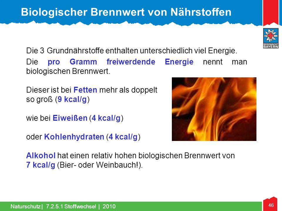 46 Naturschutz |7.2.5.1 Stoffwechsel | 2010 Die 3 Grundnährstoffe enthalten unterschiedlich viel Energie. Die pro Gramm freiwerdende Energie nennt man