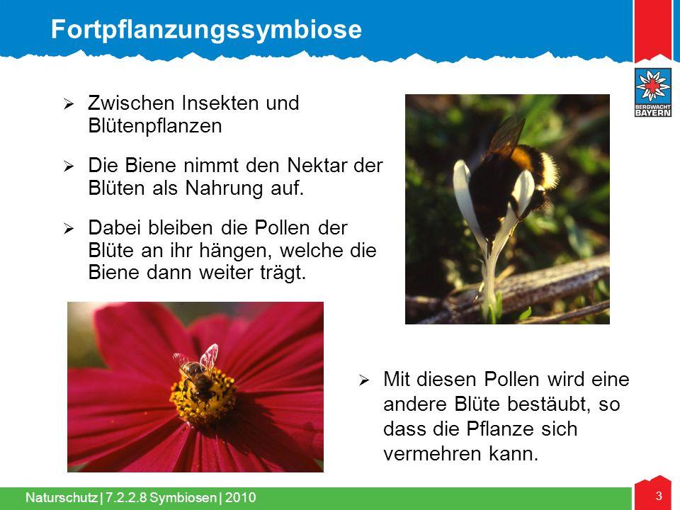 Naturschutz | 3 7.2.2.8 Symbiosen | 2010  Zwischen Insekten und Blütenpflanzen  Die Biene nimmt den Nektar der Blüten als Nahrung auf.  Dabei bleib