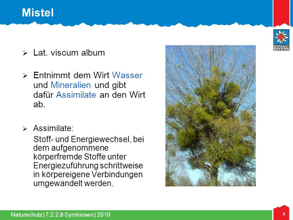 Naturschutz | 4 7.2.2.8 Symbiosen | 2010  Lat. viscum album  Entnimmt dem Wirt Wasser und Mineralien und gibt dafür Assimilate an den Wirt ab.  Ass