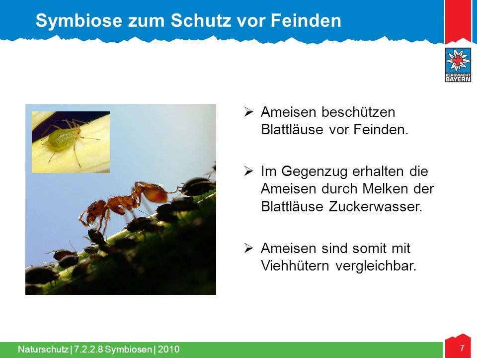 Naturschutz | 7 7.2.2.8 Symbiosen | 2010  Ameisen beschützen Blattläuse vor Feinden.  Im Gegenzug erhalten die Ameisen durch Melken der Blattläuse Z