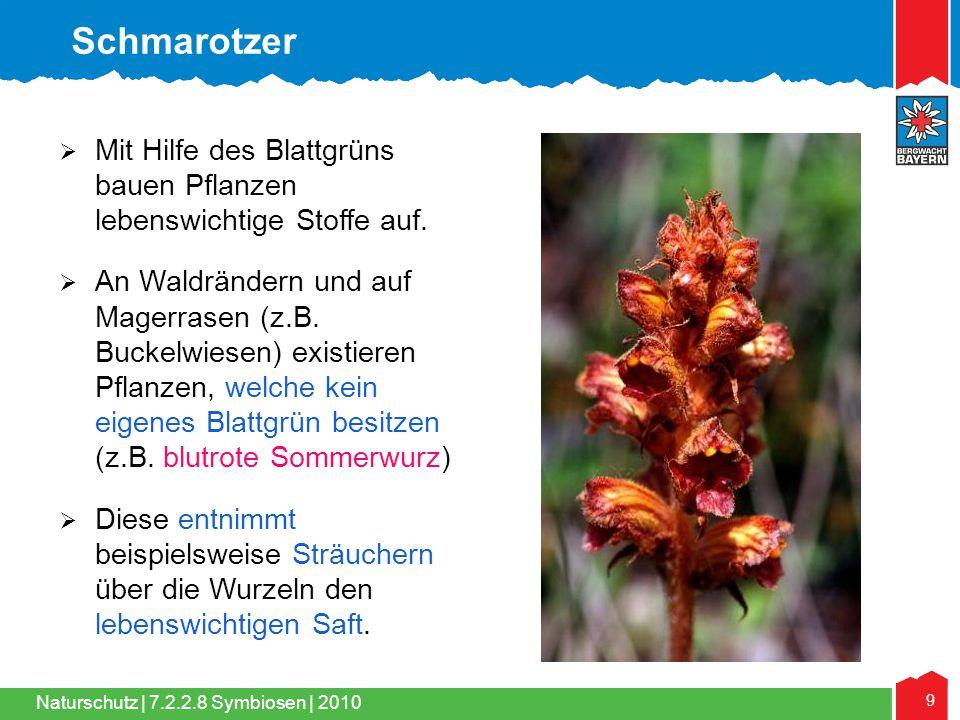 Naturschutz | 9 7.2.2.8 Symbiosen | 2010  Mit Hilfe des Blattgrüns bauen Pflanzen lebenswichtige Stoffe auf.  An Waldrändern und auf Magerrasen (z.B