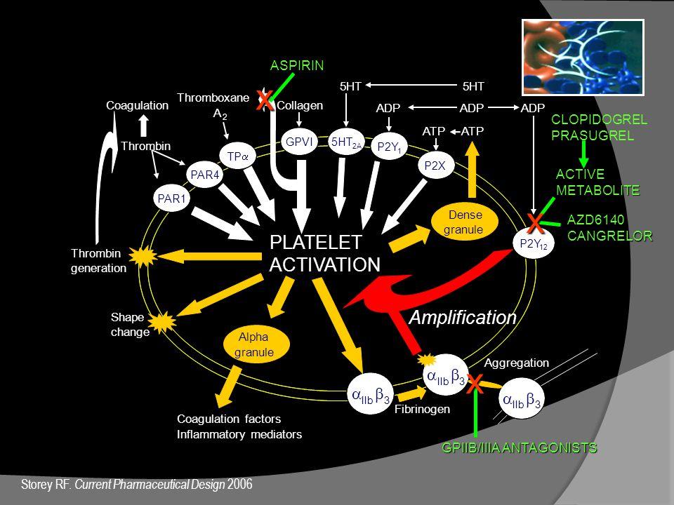 Thrombin Thromboxane A 2 5HT ADPADPPLATELET ACTIVATION P2Y 1 5HT 2A PAR1 PAR4 Thrombingeneration Shapechange  IIb  3   3   3 Fibrinogen Aggregat