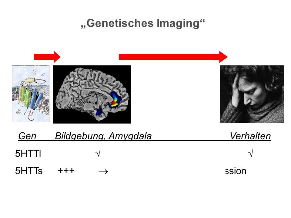 """""""Genetisches Imaging"""" Gen Bildgebung, Amygdala Verhalten 5HTTl  5HTTs +++  Belastungen  Depression"""