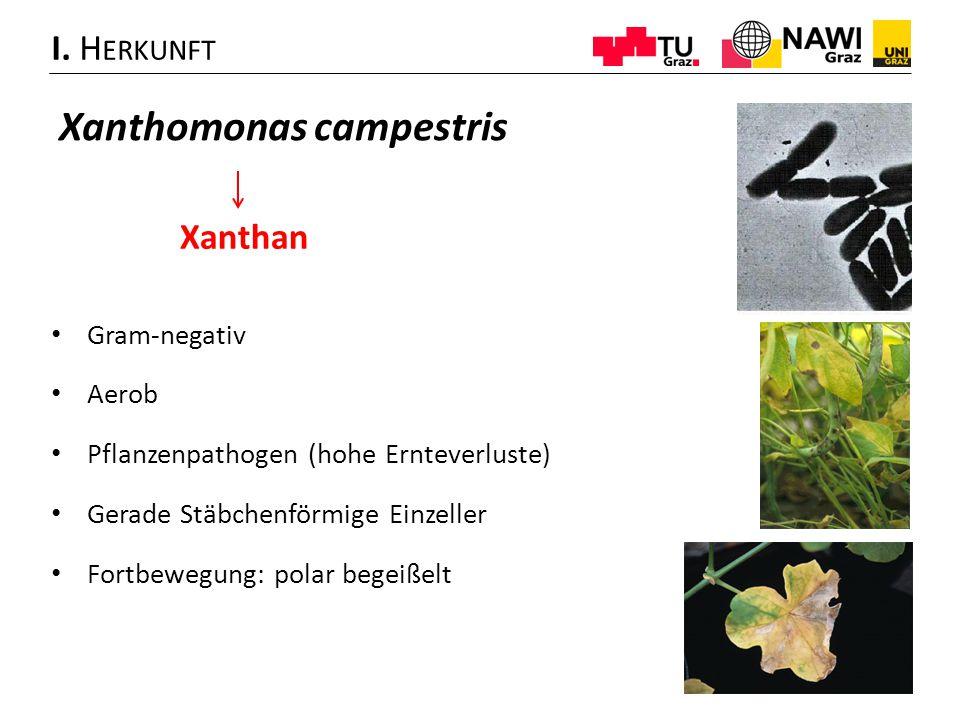 • Gram-negativ • Aerob • Pflanzenpathogen (hohe Ernteverluste) • Gerade Stäbchenförmige Einzeller • Fortbewegung: polar begeißelt I. H ERKUNFT Xanthom