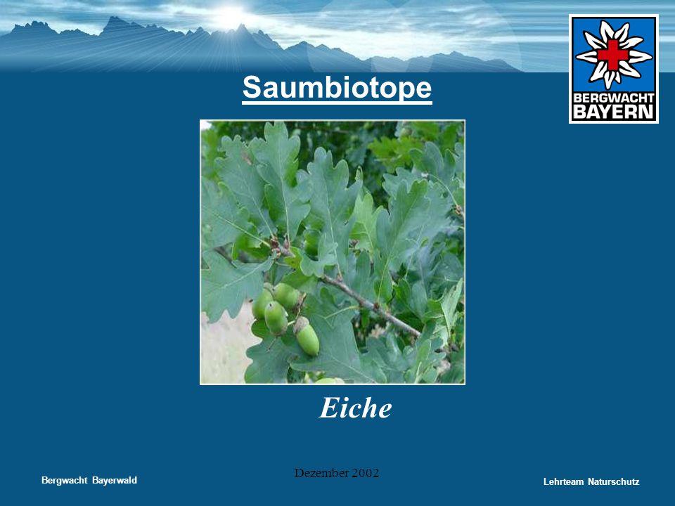 Bergwacht Bayerwald Lehrteam Naturschutz Dezember 2002 Saumbiotope Eiche