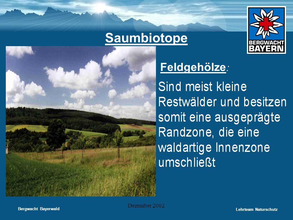 Bergwacht Bayerwald Lehrteam Naturschutz Dezember 2002 Saumbiotope • Feldgehölze :