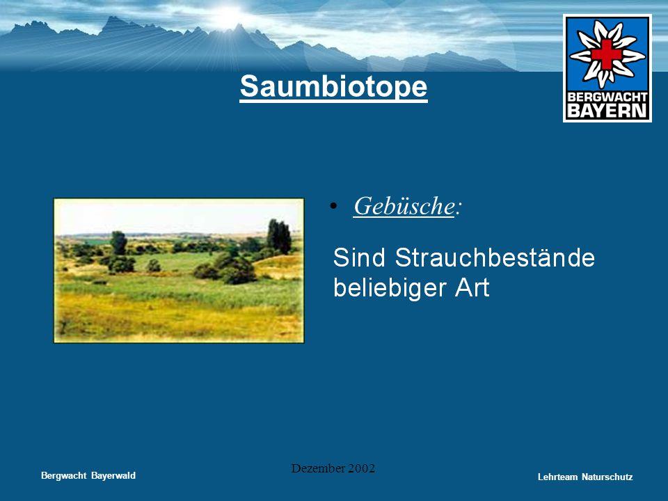 Bergwacht Bayerwald Lehrteam Naturschutz Dezember 2002 Saumbiotope •Gebüsche: