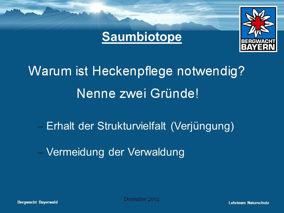 Bergwacht Bayerwald Lehrteam Naturschutz Dezember 2002 Saumbiotope – Erhalt der Strukturvielfalt (Verjüngung) – Vermeidung der Verwaldung