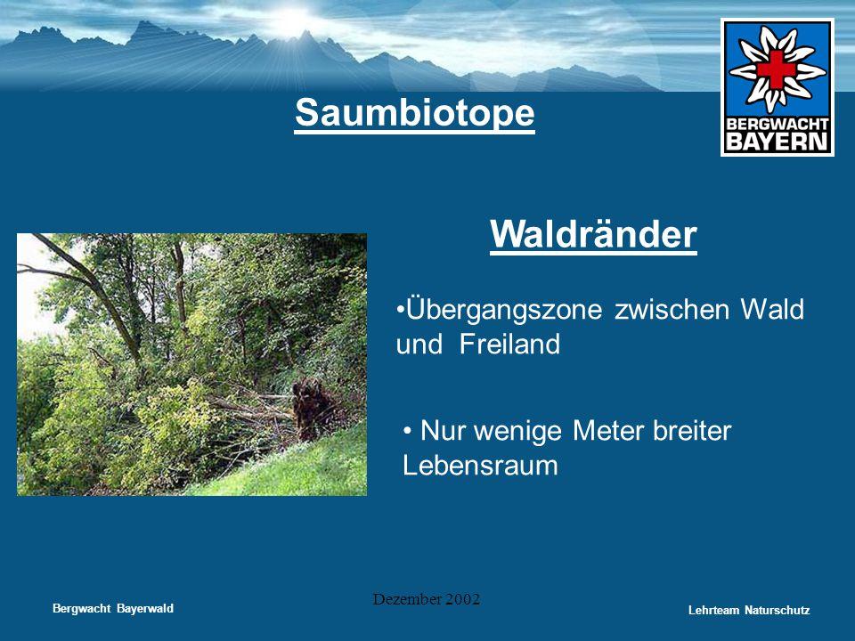 Bergwacht Bayerwald Lehrteam Naturschutz Dezember 2002 Saumbiotope Waldränder •Übergangszone zwischen Wald und Freiland • Nur wenige Meter breiter Leb