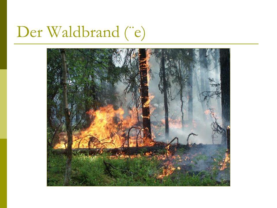 Der Waldbrand (¨e)
