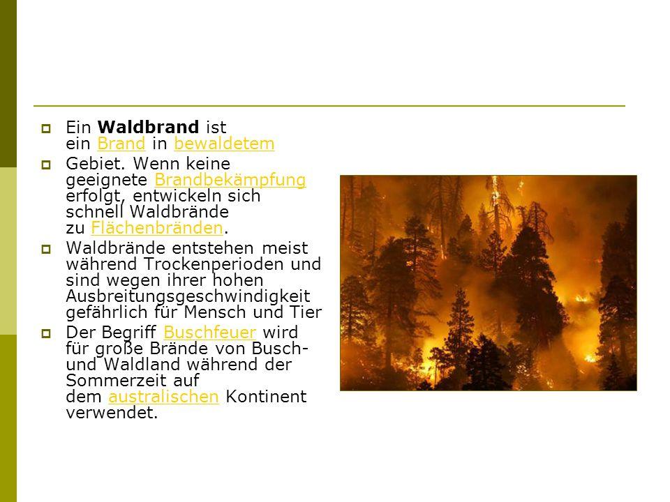  Ein Waldbrand ist ein Brand in bewaldetem Brandbewaldetem  Gebiet.