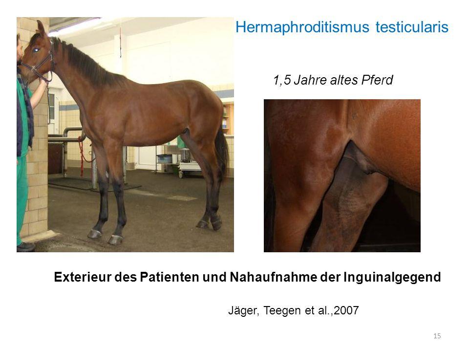15 Exterieur des Patienten und Nahaufnahme der Inguinalgegend Jäger, Teegen et al.,2007 Hermaphroditismus testicularis 1,5 Jahre altes Pferd