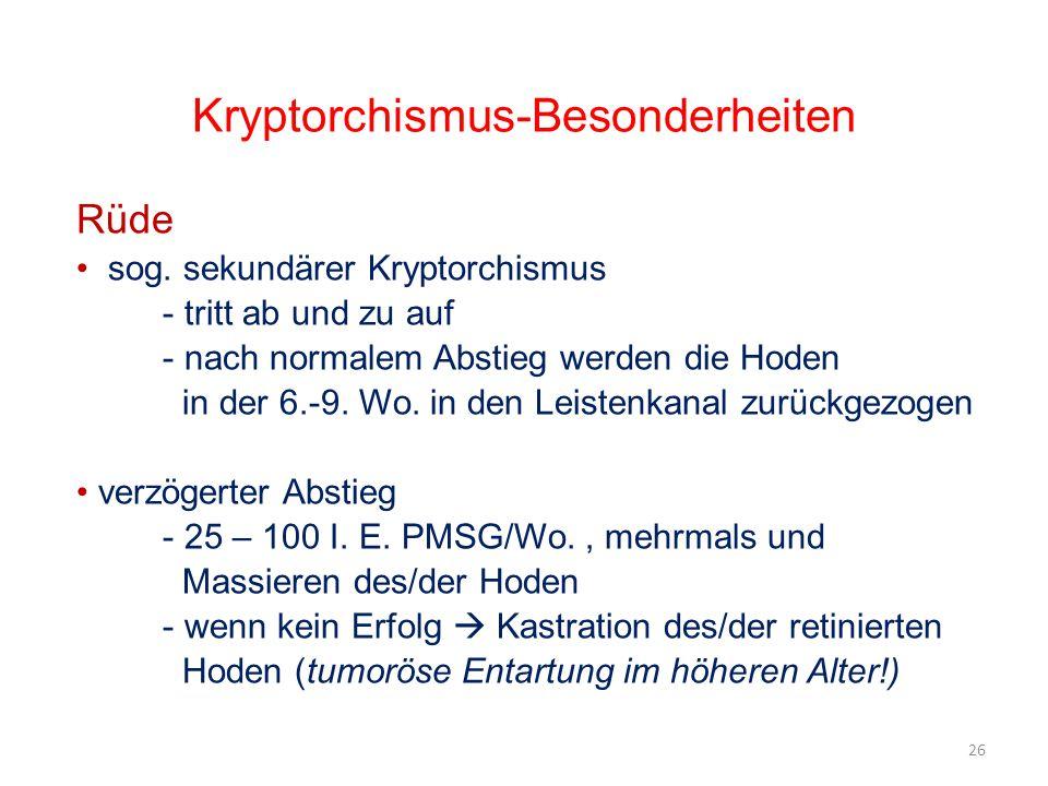 Kryptorchismus-Besonderheiten Rüde sog. sekundärer Kryptorchismus - tritt ab und zu auf - nach normalem Abstieg werden die Hoden in der 6.-9. Wo. in d