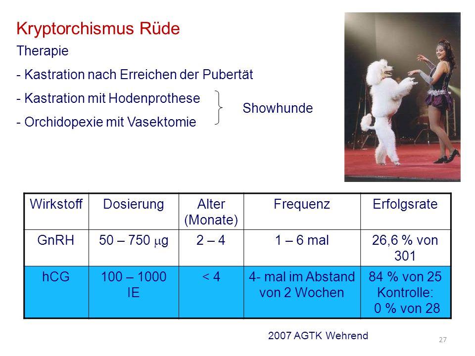 Kryptorchismus Rüde Therapie - Kastration nach Erreichen der Pubertät - Kastration mit Hodenprothese - Orchidopexie mit Vasektomie Showhunde WirkstoffDosierungAlter (Monate) FrequenzErfolgsrate GnRH 50 – 750  g 2 – 41 – 6 mal26,6 % von 301 hCG100 – 1000 IE < 44- mal im Abstand von 2 Wochen 84 % von 25 Kontrolle: 0 % von 28 2007 AGTK Wehrend 27