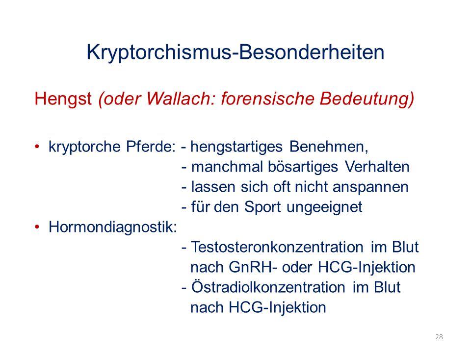 Kryptorchismus-Besonderheiten Hengst (oder Wallach: forensische Bedeutung) kryptorche Pferde: - hengstartiges Benehmen, - manchmal bösartiges Verhalten - lassen sich oft nicht anspannen - für den Sport ungeeignet Hormondiagnostik: - Testosteronkonzentration im Blut nach GnRH- oder HCG-Injektion - Östradiolkonzentration im Blut nach HCG-Injektion 28