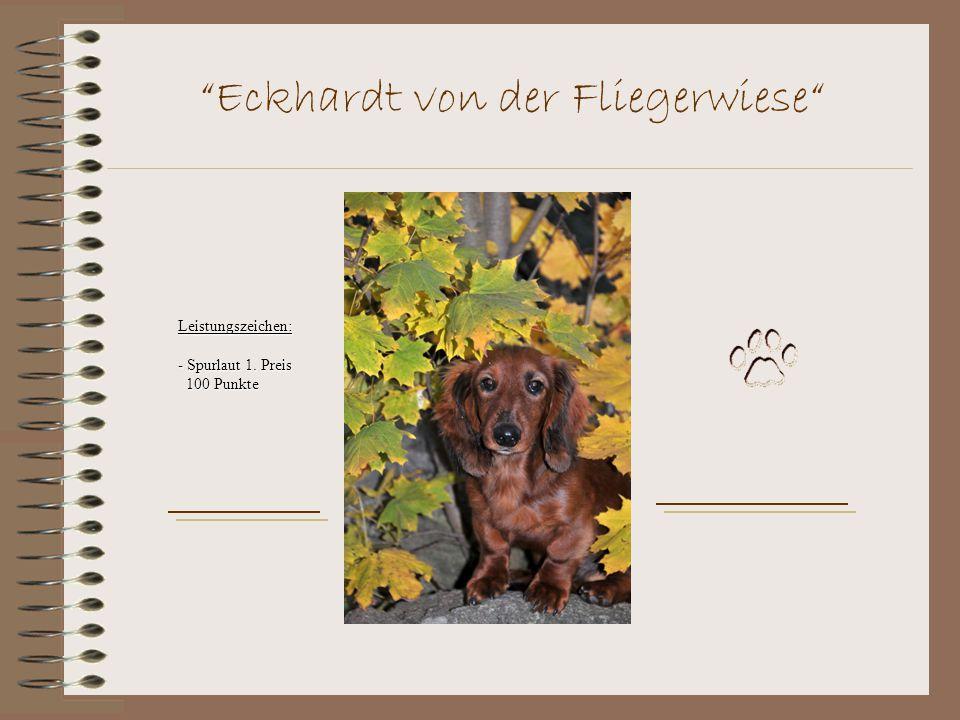 Eckhardt von der Fliegerwiese Leistungszeichen: - Spurlaut 1. Preis 100 Punkte 100 Punkte