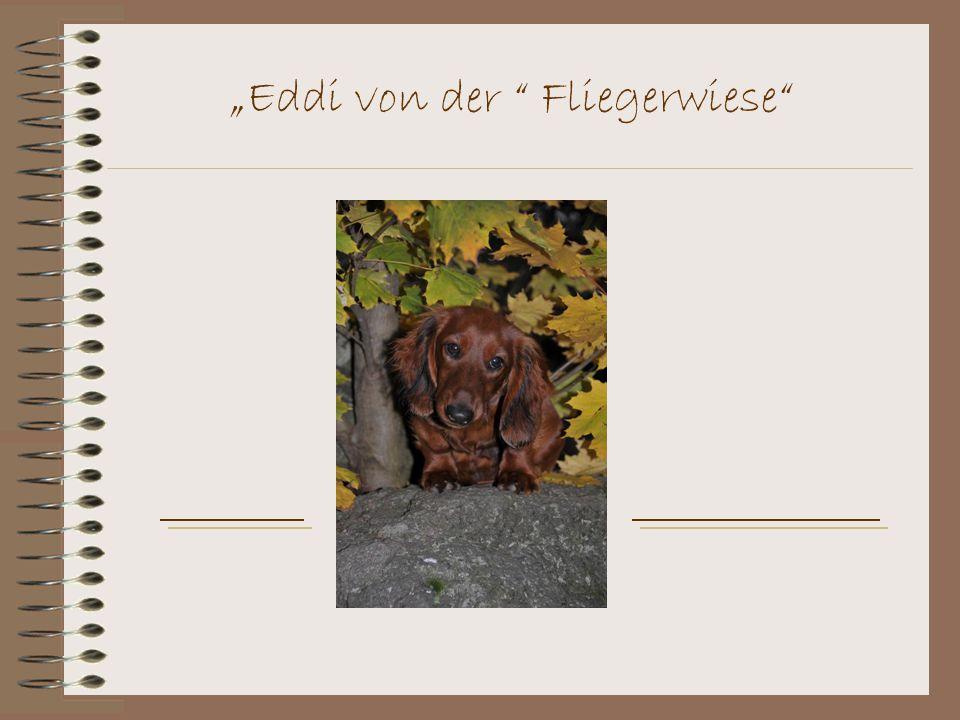 """""""Eddi von der Fliegerwiese"""