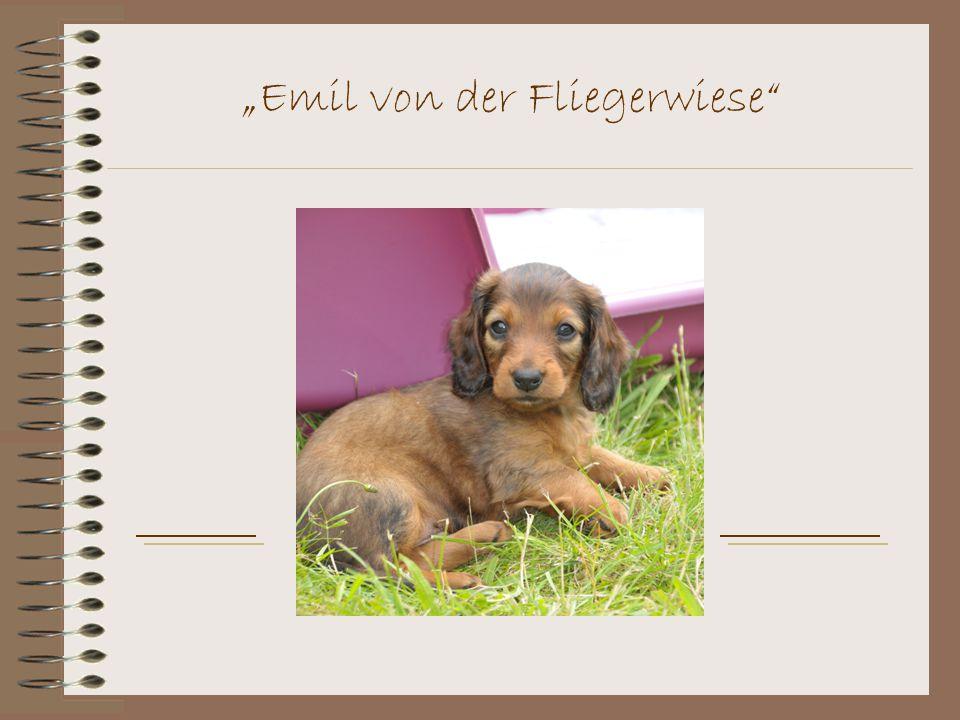 """""""Emil von der Fliegerwiese"""