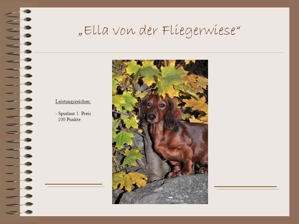 """""""Ella von der Fliegerwiese Leistungszeichen: - Spurlaut 1. Preis 100 Punkte 100 Punkte"""