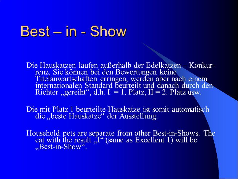 Best – in - Show Die Hauskatzen laufen außerhalb der Edelkatzen – Konkur- renz.