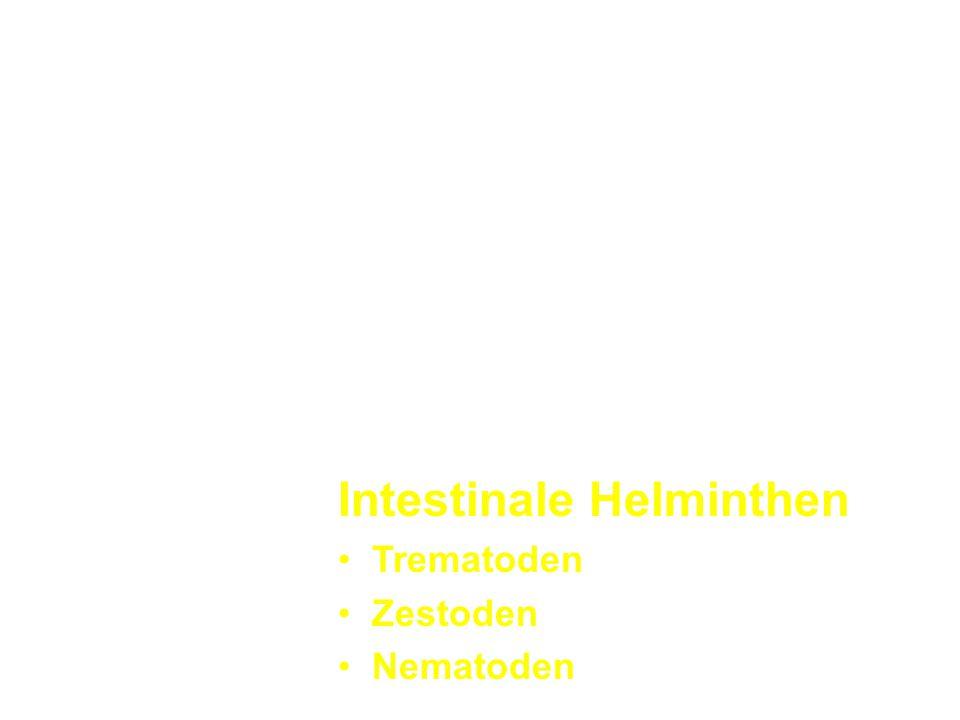 Intestinale Helminthen Trematoden Zestoden Nematoden