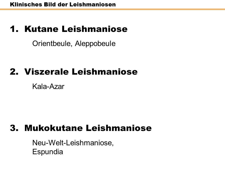 Klinisches Bild der Leishmaniosen 1. Kutane Leishmaniose Orientbeule, Aleppobeule 2. Viszerale Leishmaniose Kala-Azar 3. Mukokutane Leishmaniose Neu-W