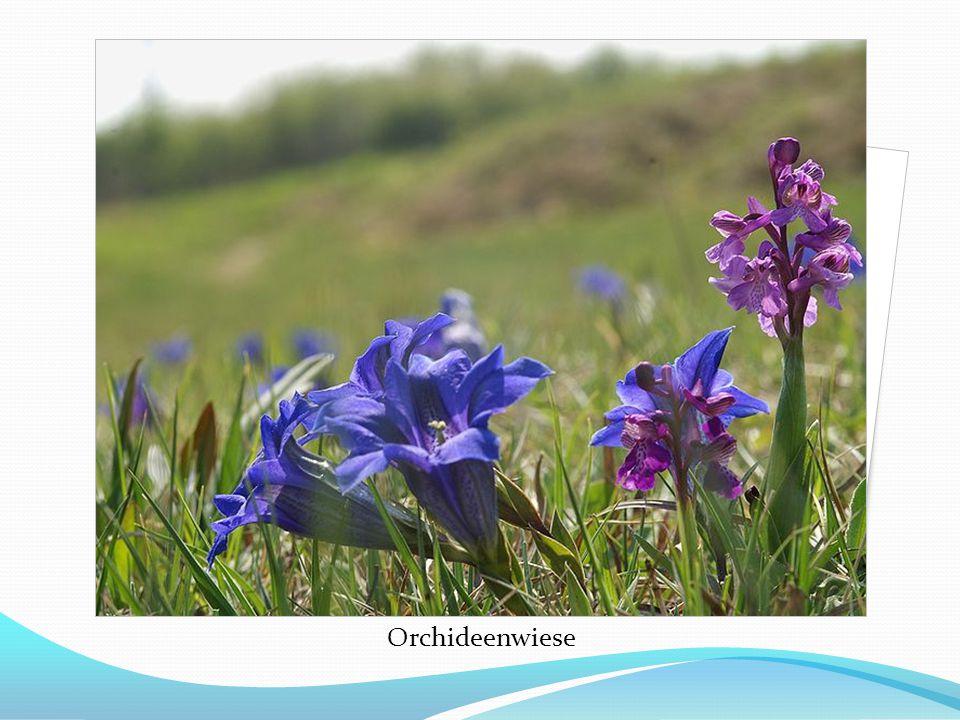 Der Naturschutzbund Deutschland e.V.