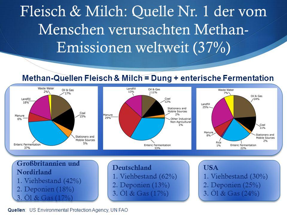 Fleisch & Milch: Quelle Nr. 1 der vom Menschen verursachten Methan- Emissionen weltweit (37%) Methan-Quellen Fleisch & Milch = Dung + enterische Ferme