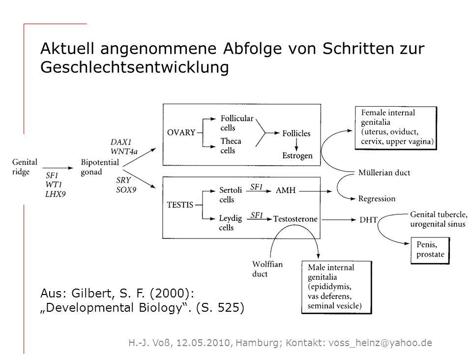 H.-J. Voß, 12.05.2010, Hamburg; Kontakt: voss_heinz@yahoo.de Aktuell angenommene Abfolge von Schritten zur Geschlechtsentwicklung Aus: Gilbert, S. F.