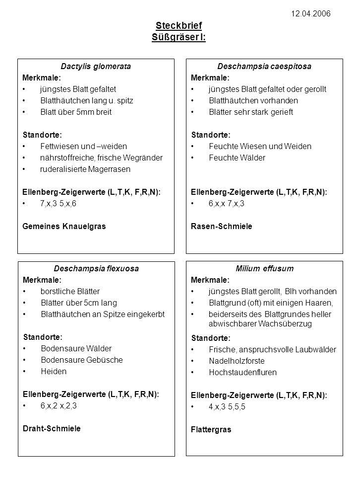 Calamagrostis arundinacea Merkmale: x Standorte: x Ellenberg-Zeigerwerte (L,T,K, F,R,N): x xy Steckbrief Süßgräser II: Holcus mollis Merkmale: x Standorte: x Ellenberg-Zeigerwerte (L,T,K, F,R,N): x xy 19.04.2006 Hordelymus europaeus Merkmale: x Standorte: x Ellenberg-Zeigerwerte (L,T,K, F,R,N): x xy Festuca altissima Merkmale: x Standorte: x Ellenberg-Zeigerwerte (L,T,K, F,R,N): x xy