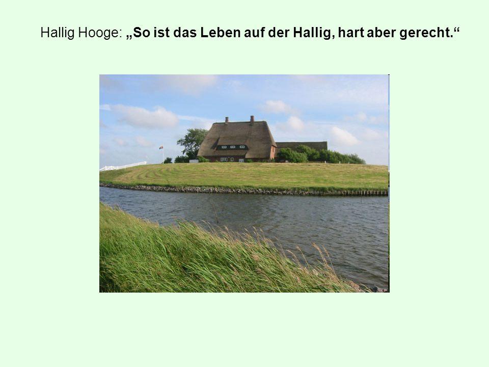 """Hallig Hooge: """"So ist das Leben auf der Hallig, hart aber gerecht."""""""