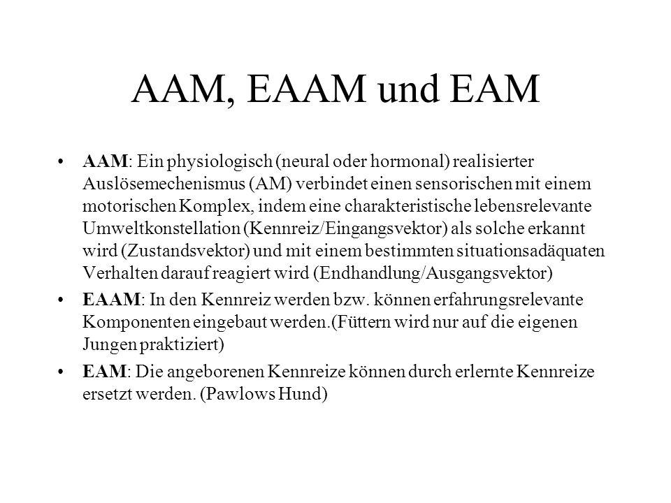 AAM, EAAM und EAM AAM: Ein physiologisch (neural oder hormonal) realisierter Auslösemechenismus (AM) verbindet einen sensorischen mit einem motorische