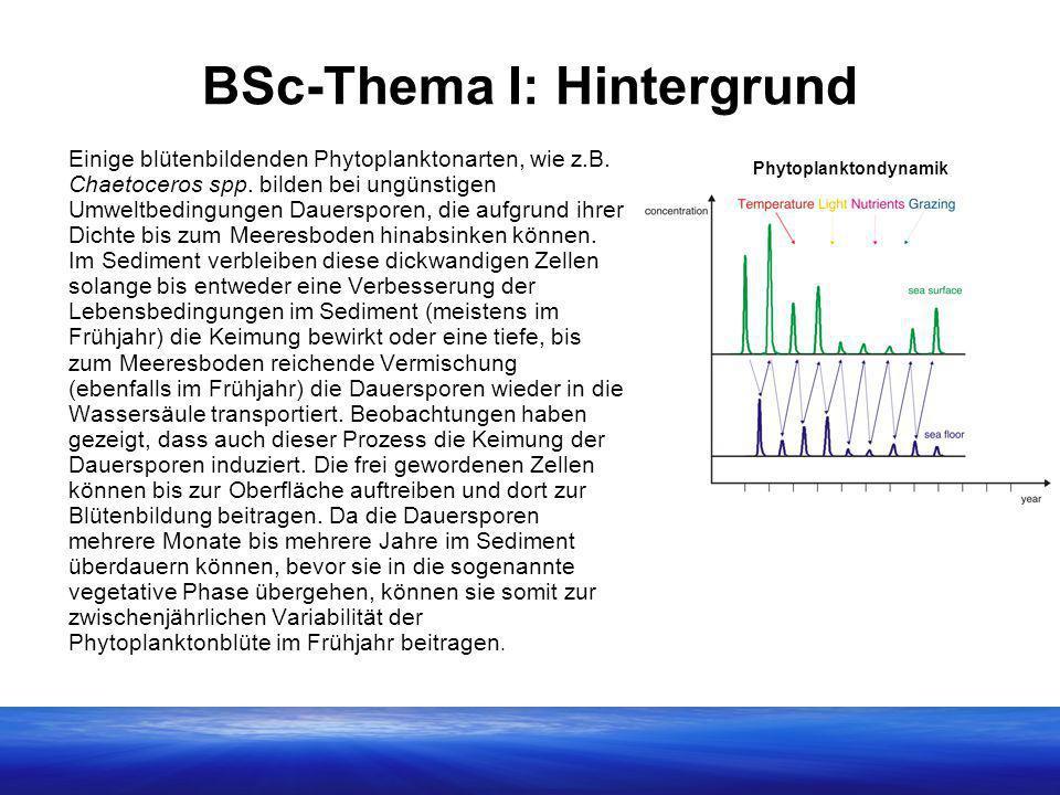 BSc-Thema I: Hintergrund Einige blütenbildenden Phytoplanktonarten, wie z.B. Chaetoceros spp. bilden bei ungünstigen Umweltbedingungen Dauersporen, di