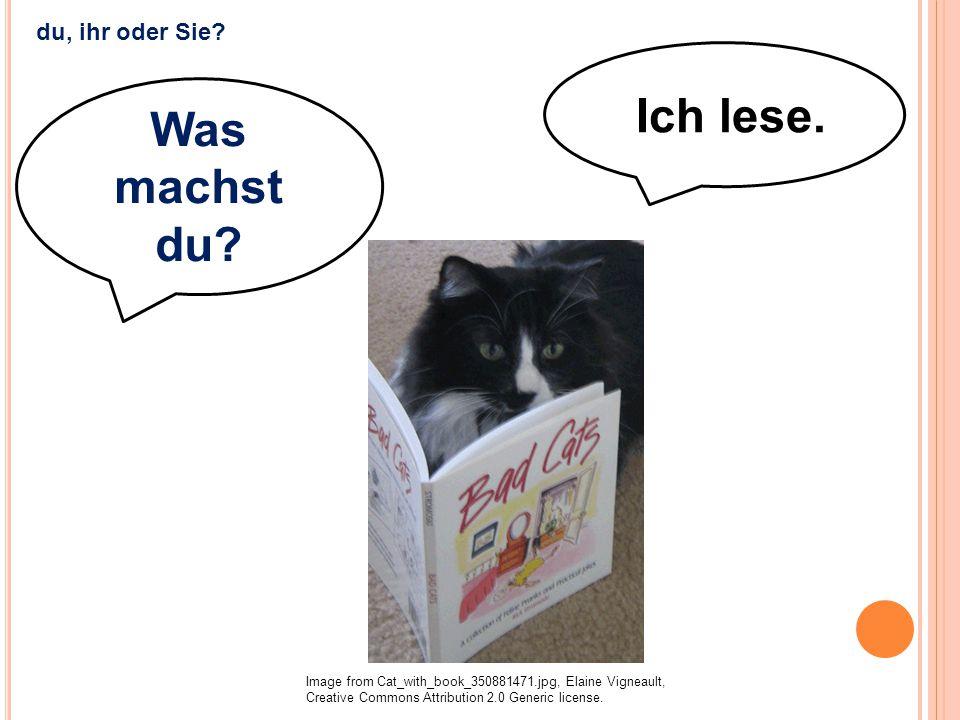 Ich lese. Was machst du? Image from Cat_with_book_350881471.jpg, Elaine Vigneault, Creative Commons Attribution 2.0 Generic license. du, ihr oder Sie?