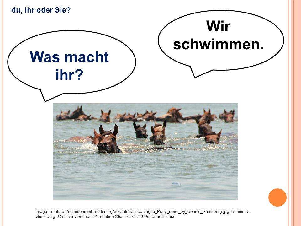 Wir schwimmen. Was macht ihr? Image fromhttp://commons.wikimedia.org/wiki/File:Chincoteague_Pony_swim_by_Bonnie_Gruenberg.jpg, Bonnie U. Gruenberg, Cr