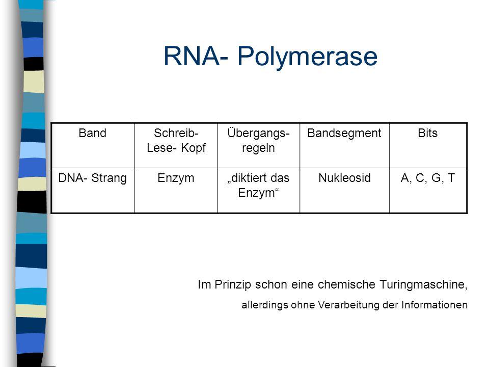 """RNA- Polymerase BandSchreib- Lese- Kopf Übergangs- regeln BandsegmentBits DNA- StrangEnzym""""diktiert das Enzym NukleosidA, C, G, T Im Prinzip schon eine chemische Turingmaschine, allerdings ohne Verarbeitung der Informationen"""