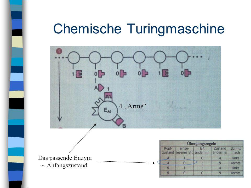 """Chemische Turingmaschine Das passende Enzym 4 """"Arme"""" ~ Anfangszustand"""