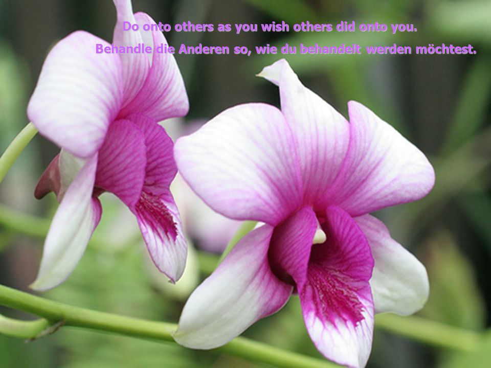 o onto others as you wish others did onto you.
