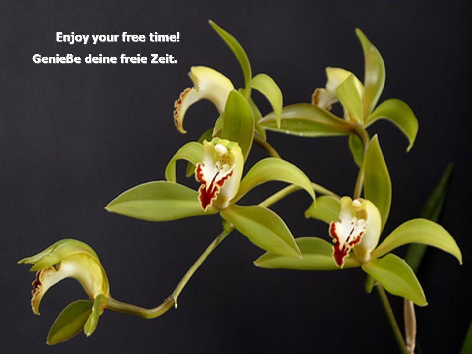 E njoy your free time! Genieße deine freie Zeit.