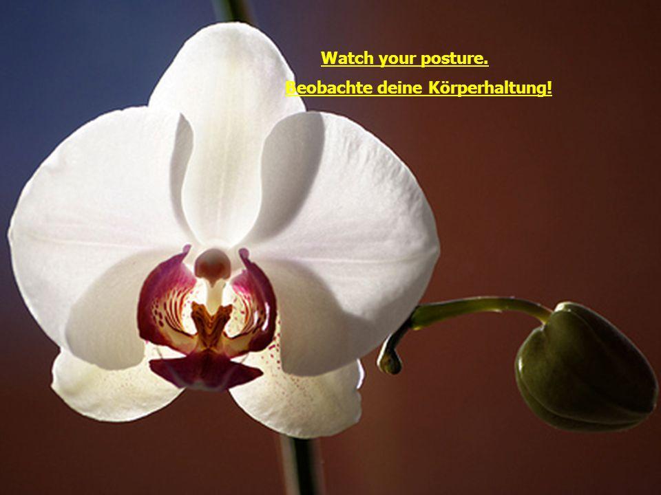 Watch your posture. Beobachte deine Körperhaltung!