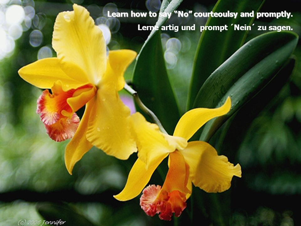 Learn how to say No courteoulsy and promptly. Lerne artig und prompt ´Nein´ zu sagen.