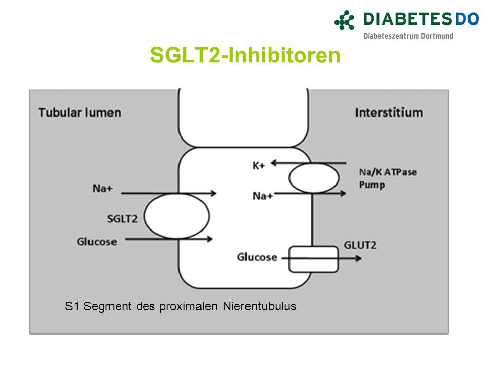 SGLT2-Inhibitoren Was ist gesichert? S1 Segment des proximalen Nierentubulus