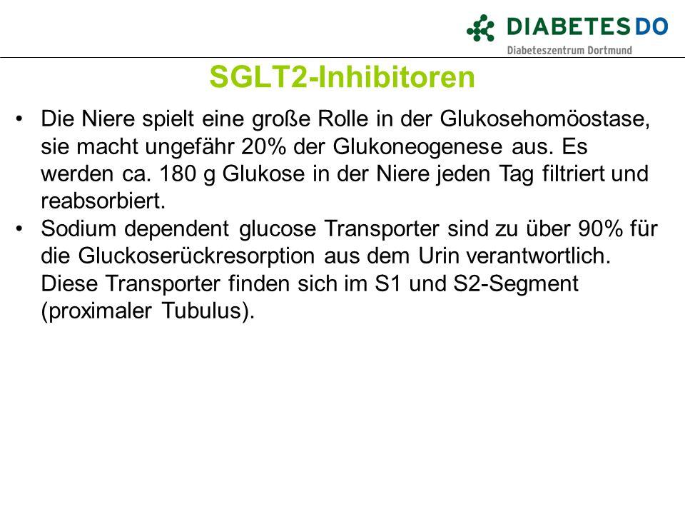 SGLT2-Inhibitoren Was ist gesichert? Die Niere spielt eine große Rolle in der Glukosehomöostase, sie macht ungefähr 20% der Glukoneogenese aus. Es wer