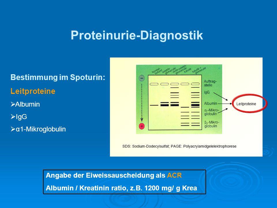 Proteinurie-Diagnostik Bestimmung im Spoturin: Leitproteine  Albumin  IgG  α1-Mikroglobulin Angabe der Eiweissauscheidung als ACR Albumin / Kreatin