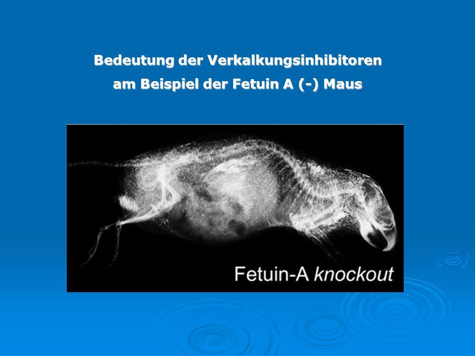 Bedeutung der Verkalkungsinhibitoren am Beispiel der Fetuin A (-) Maus